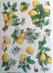 Renkalik rizspapír 49*35 citrom 165